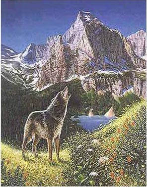 Can you find the other 4 wolves in the rocky cliffs?